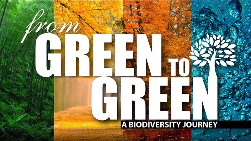 De verde a verde