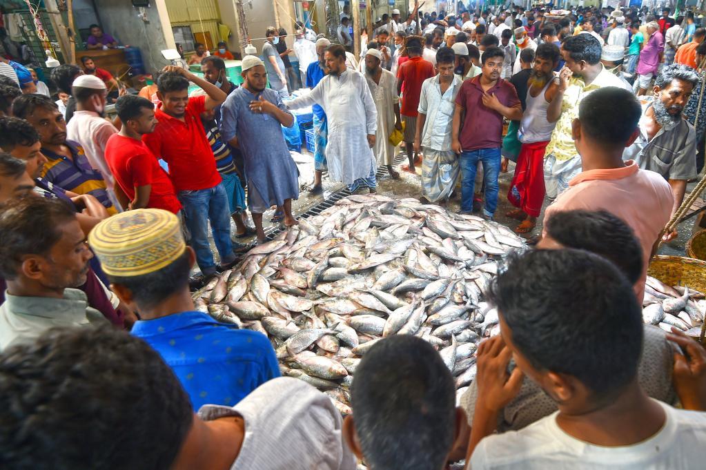 Peces ilish en una estación de desembarque de pescado en Chandpur, Bangladesh