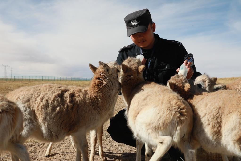 Qinghai: Estación de Protección Sonam Dargye en Hoh Xil